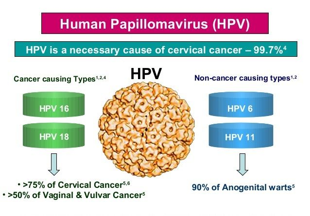 How Many Strains Of Hpv Cause Cervical Cancer