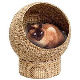 griffoir chat osier