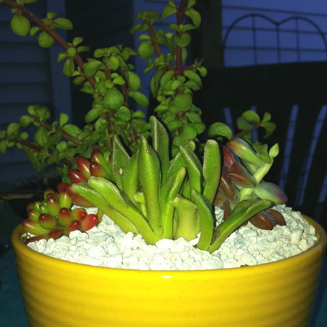 Make Your Own Plant Garden I Bought Succulents From Lowes And A