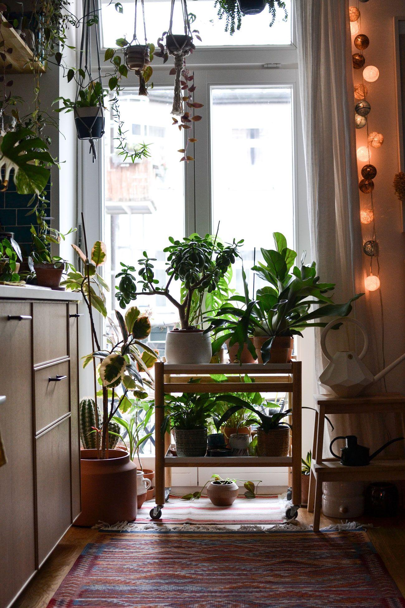 Arredare con le piante fa bene lo spiega il libro Plant