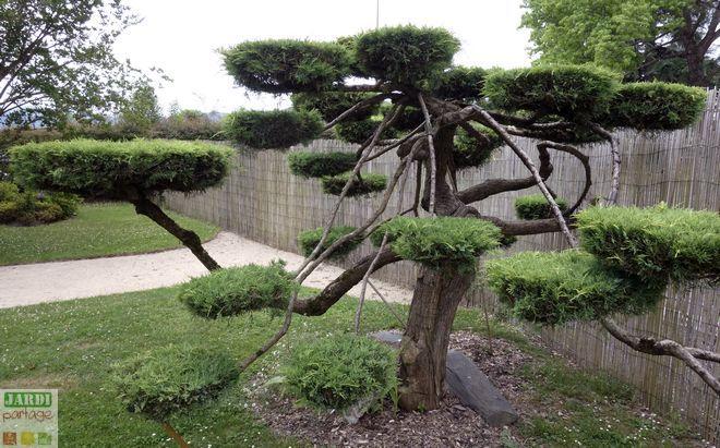 lart des jardins japonais accorde importante la taille stricte des arbres un