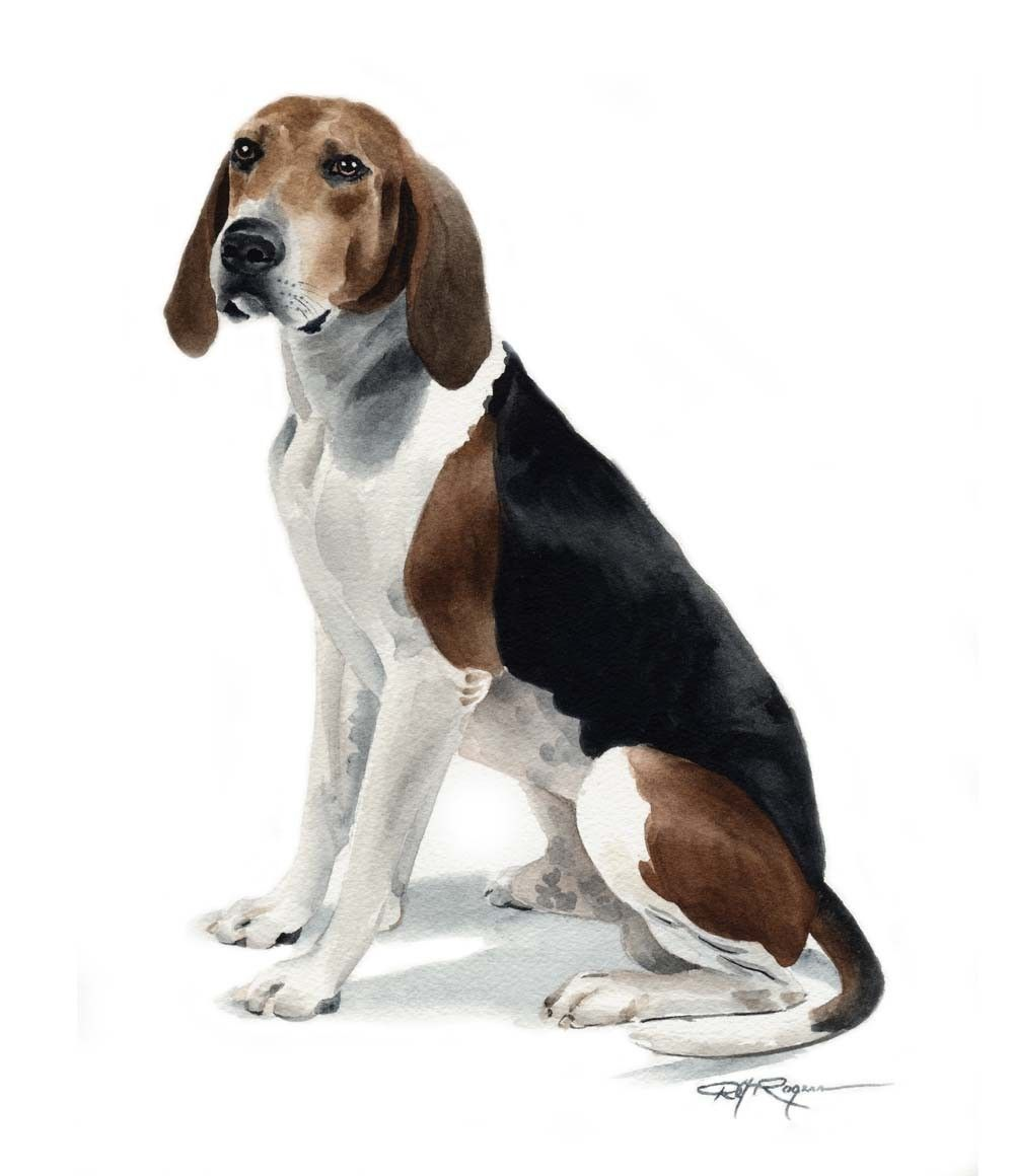 Treeing walker coonhound dog watercolor painting art print for Puppy dog walker