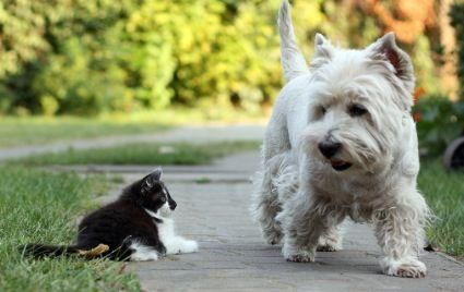 Don't CAT-A-TUDE me, Sista'.  I'm the leader of this pack around here!