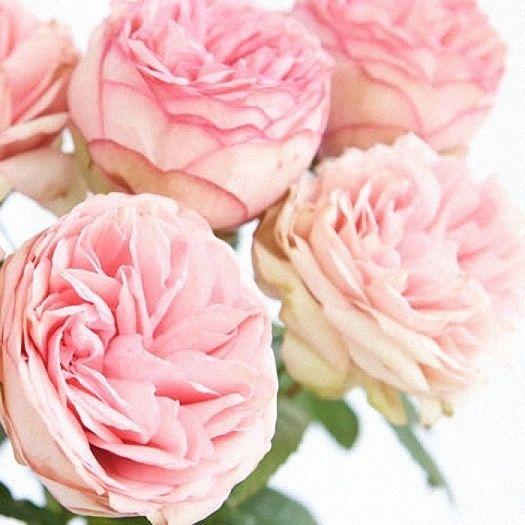 Fiori Rosa Nomi.The Rose Garden Rose Flower Peonie Roseto E Fiori