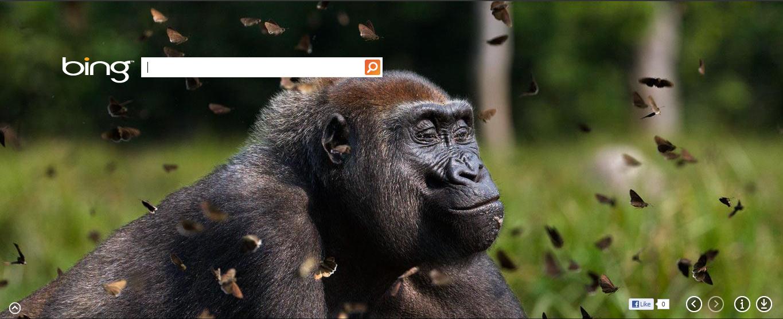 Western lowland gorilla female in a cloud of butterflies. www.bing.com #photography #animals