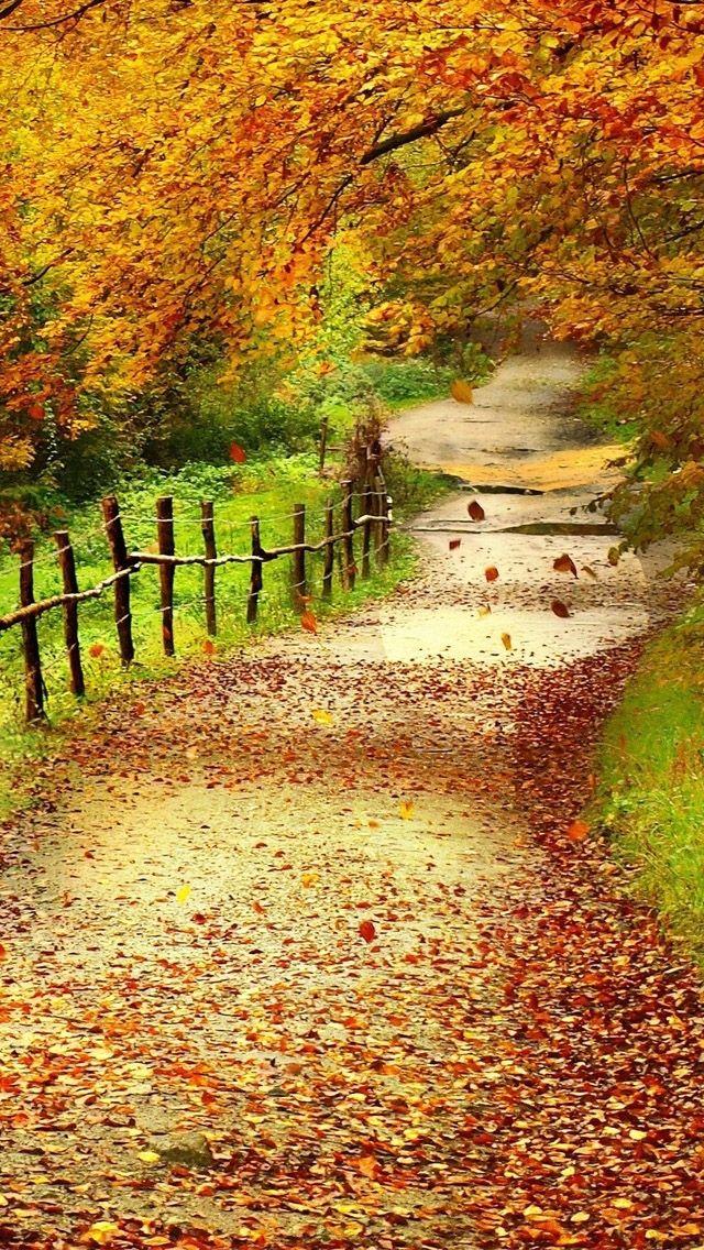 Autumn Nature Iphone Wallpaper Iphone Hd Wallpapers Cenario De Outono Lindas Paisagens Natureza Bela