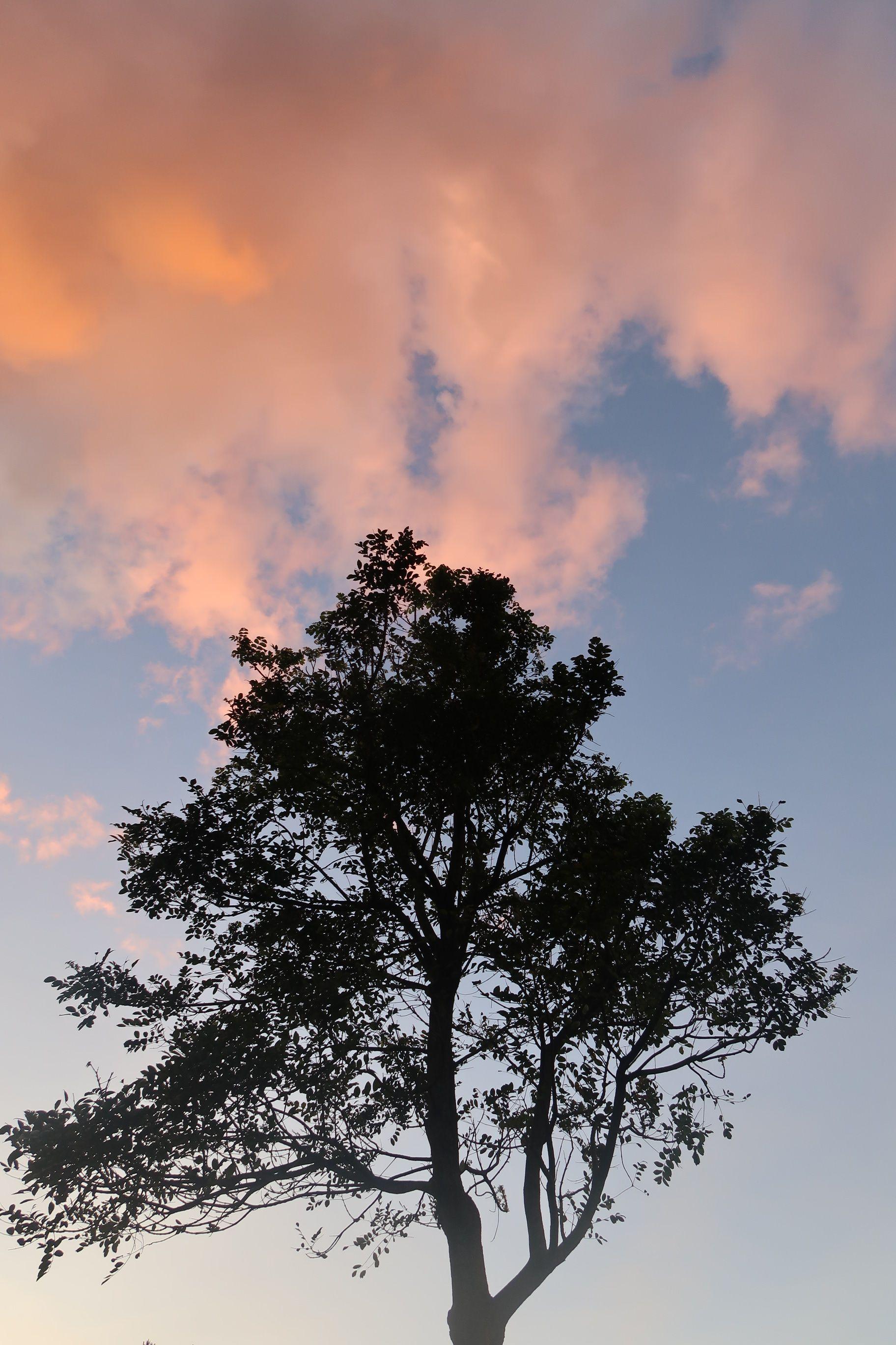 Langit Senja D'pakar Bandung Langit, Pemandangan anime