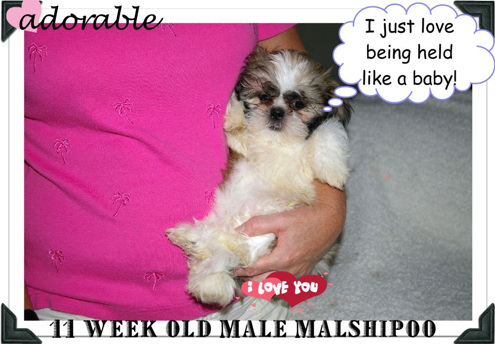 Excuse Me I Am Not A Puppy But A Real Baby Hold Me Like One Please Dog Love Puppies Popular Breeds