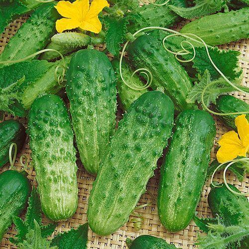 Shop All Cucumber Seeds Cucumber Seeds Vegetable Seed 400 x 300