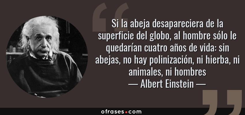 Si la abeja desapareciera de la superficie del globo, al hombre sólo le  quedarían cuatro años de vida: sin abejas, no hay pol… | Einstein, Abejas,  Frases de famosos