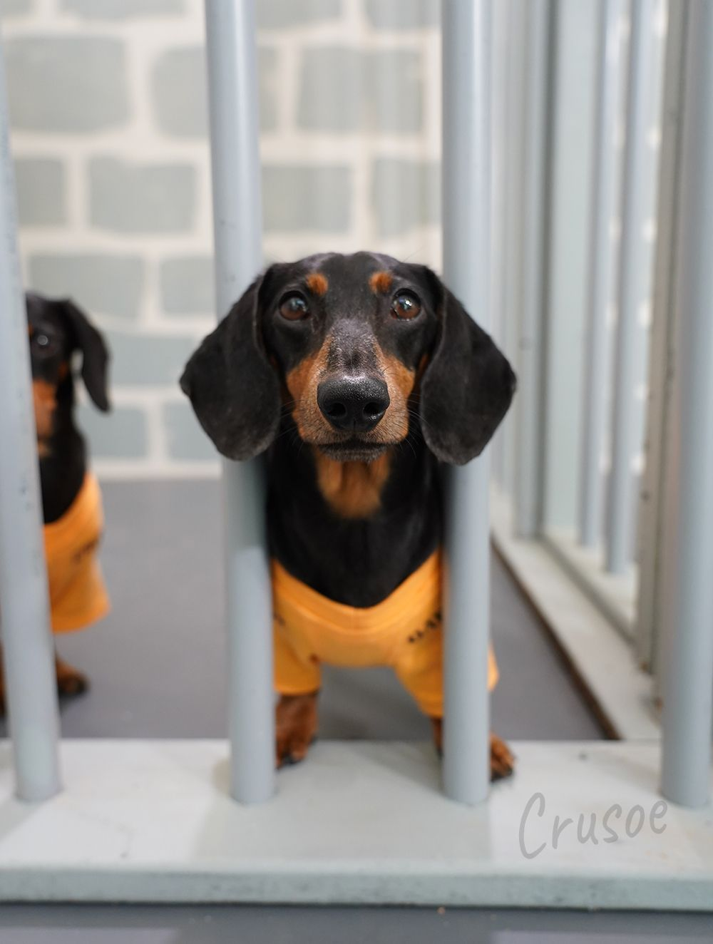 Ep 8 There S More Than One Way To Escape Prison Dachshund