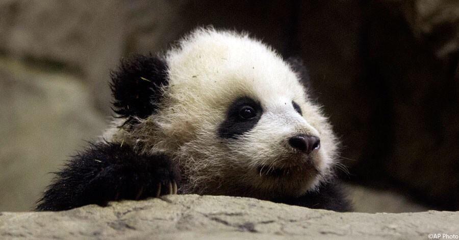 Happy birthday @BaoBaoPanda -- an adorable symbol of U.S.-#China cooperation! http://go.usa.gov/mT9e #BaoBaoBday pic.twitter.com/JrDNUvqctp