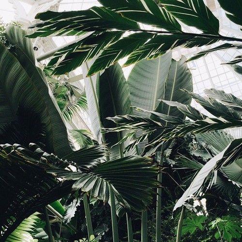 Beautiful Nature Girl Wallpaper: VOGUE Stockholm. Via Tumblr #plants #model #christmas