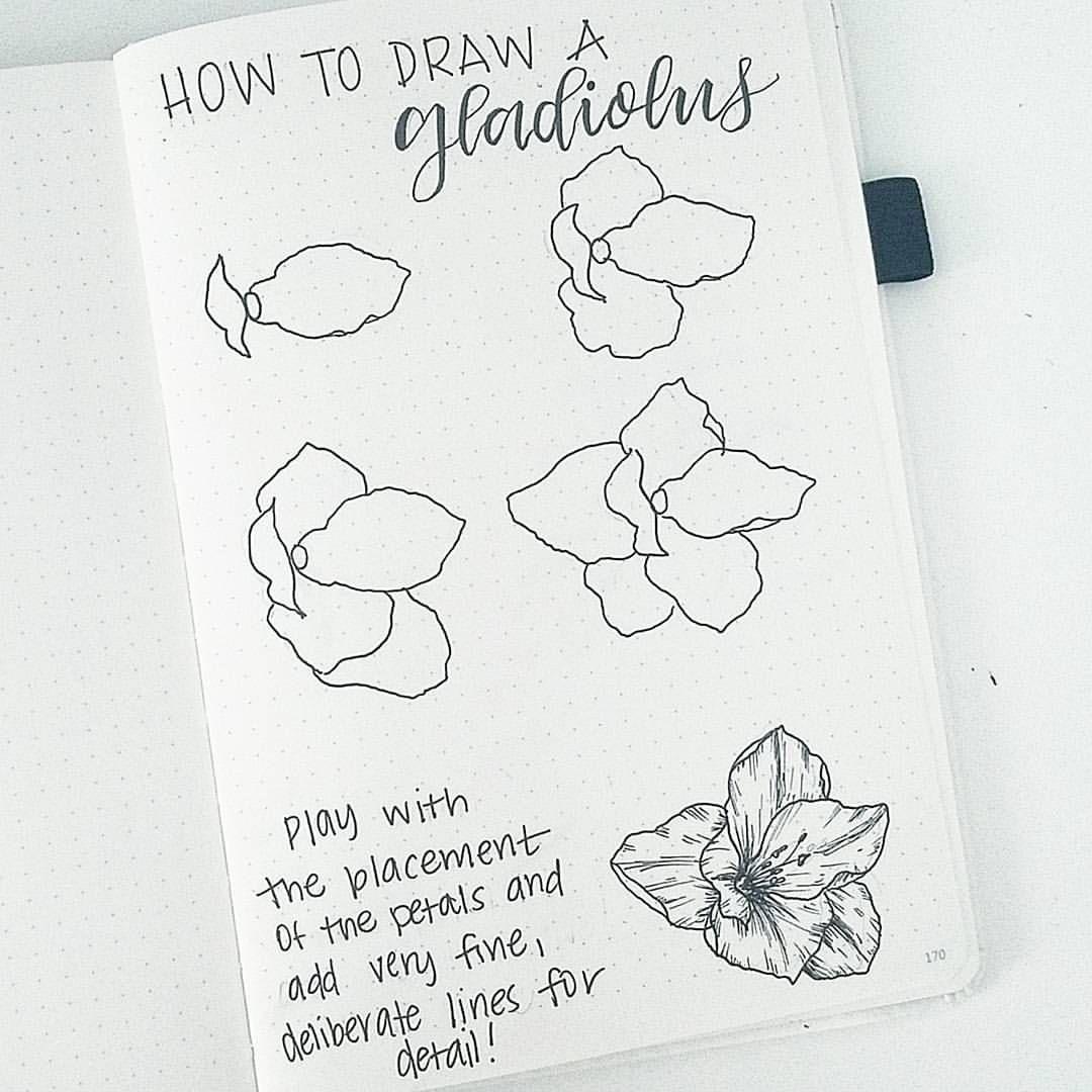 2 398 Vind Ik Leuks 26 Reacties Liz Bonjournal Op Instagram The Gladiolus Is The August Birth F Flower Doodles Flower Drawing Tutorials Flower Drawing