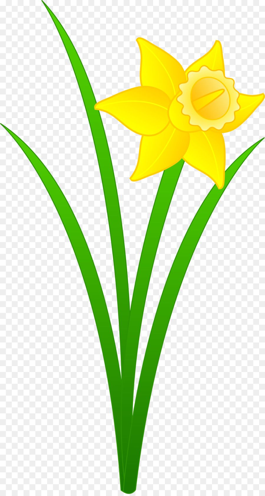 Flowers Background Narcissus Flower Kisspng Daffodil Content Narcissus Flower Flower Clipart Daffodils