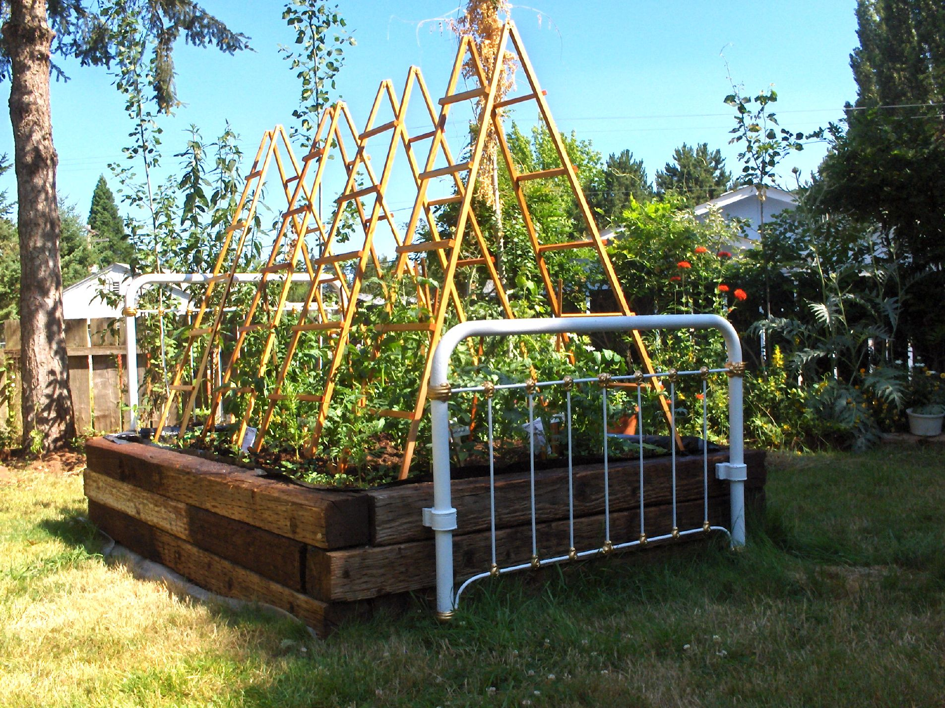 Tomato trellis designs our latest trellis design is not for Trellis design ideas