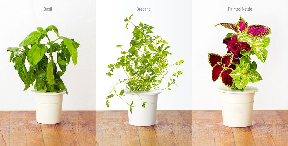 Product Of The Week Click Grow Smart Garden With 400 x 300