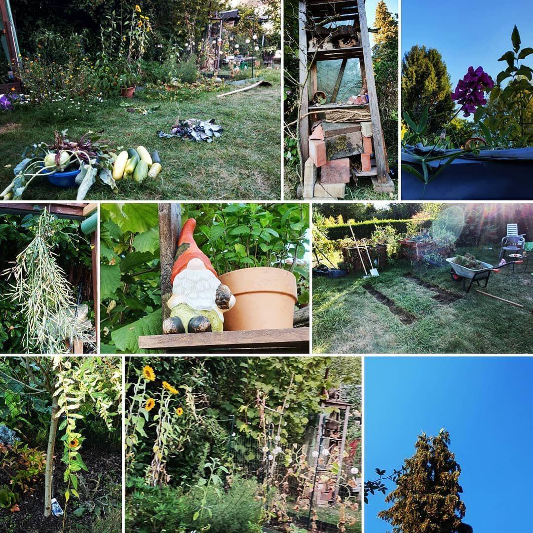 Heute war ein geschäftiger Tag in meinem Garten und zum Glück hatte ich meine supermega Helferin an meiner Seite!  Dank ihr ist der Gemüse- und zukünftige Bauerngarten um ein wunderschönes Insektenhotel mitsamt Souterrain-Wohnstube für Igel reicher! Vielen Dank!  Ich habe mich derweil um die abschließende Ernte in den Hochbeeten und einem Bodenbeet gekümmert und schonmal mit meiner Lieblingsbeschäftigung begonnen: Rasen abstechen und Beete anlegen. Ich möchte es gerne schaffen noch in #beetanlegen