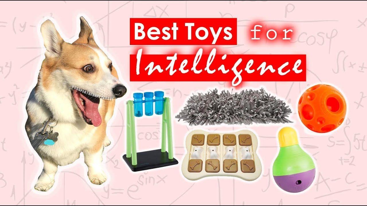Smart Dog Toys Best Toys For Intelligence Youtube Smart Dog