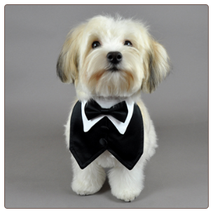 Black Satin Formal Vest & Matching Bowtie | Ring bearer, Ring and Dog