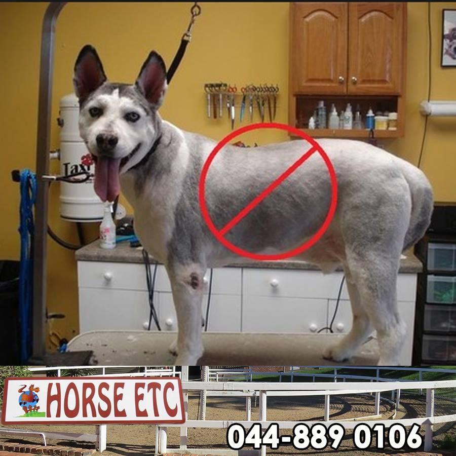 Horse Etc Dispels The Myth About Shaving A Double Coated Dog Many