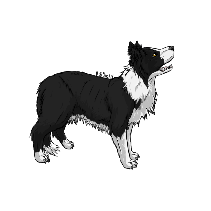 Border Collie by StormFalconFire | Border collie art, Collie, Border collie  humor