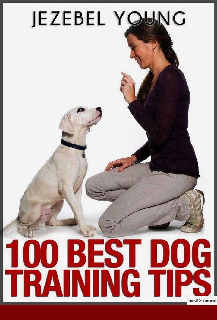 How To Train Your Dog To Fight And Pics Of How To Train A Service