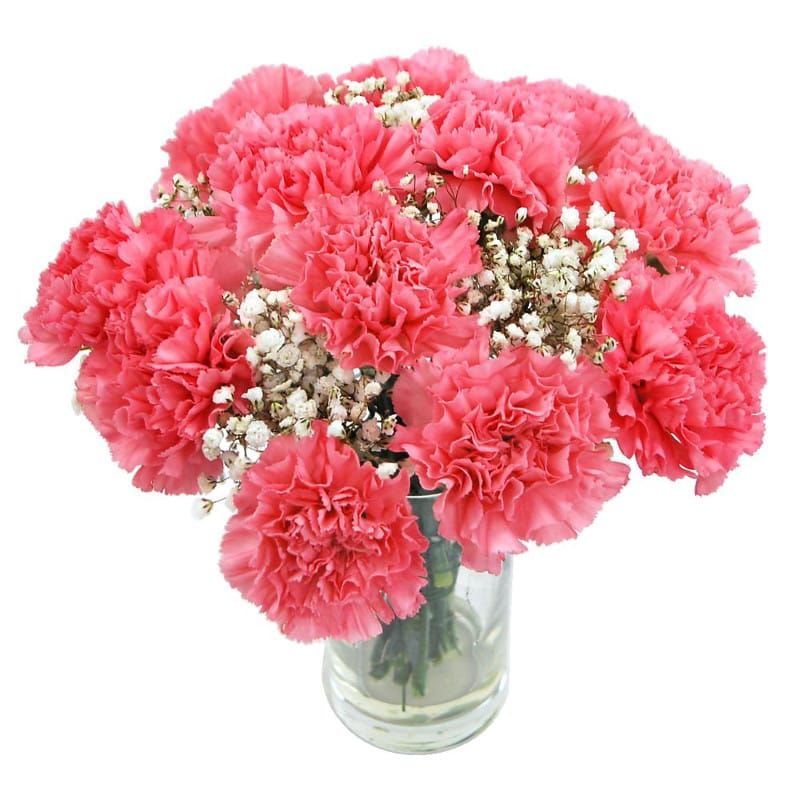 Pink Carnations Flower Delivery Brought To You By Clare Florist Carnation Flower Flower Delivery Online Flower Delivery