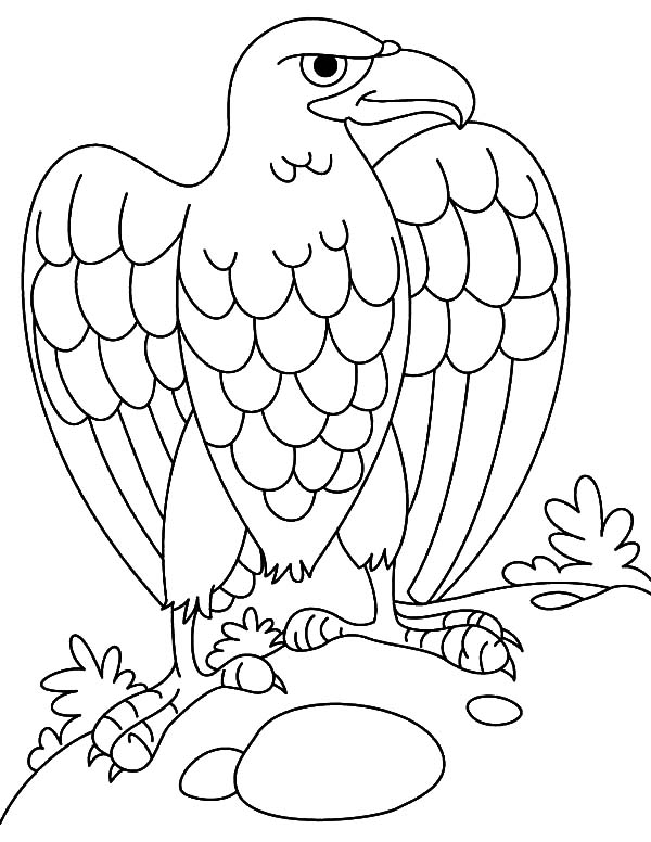 Harpy Eagle Lay Egg Coloring Pages Coloring Sun In 2020 Owl Coloring Pages Coloring Pages Animal Coloring Pages