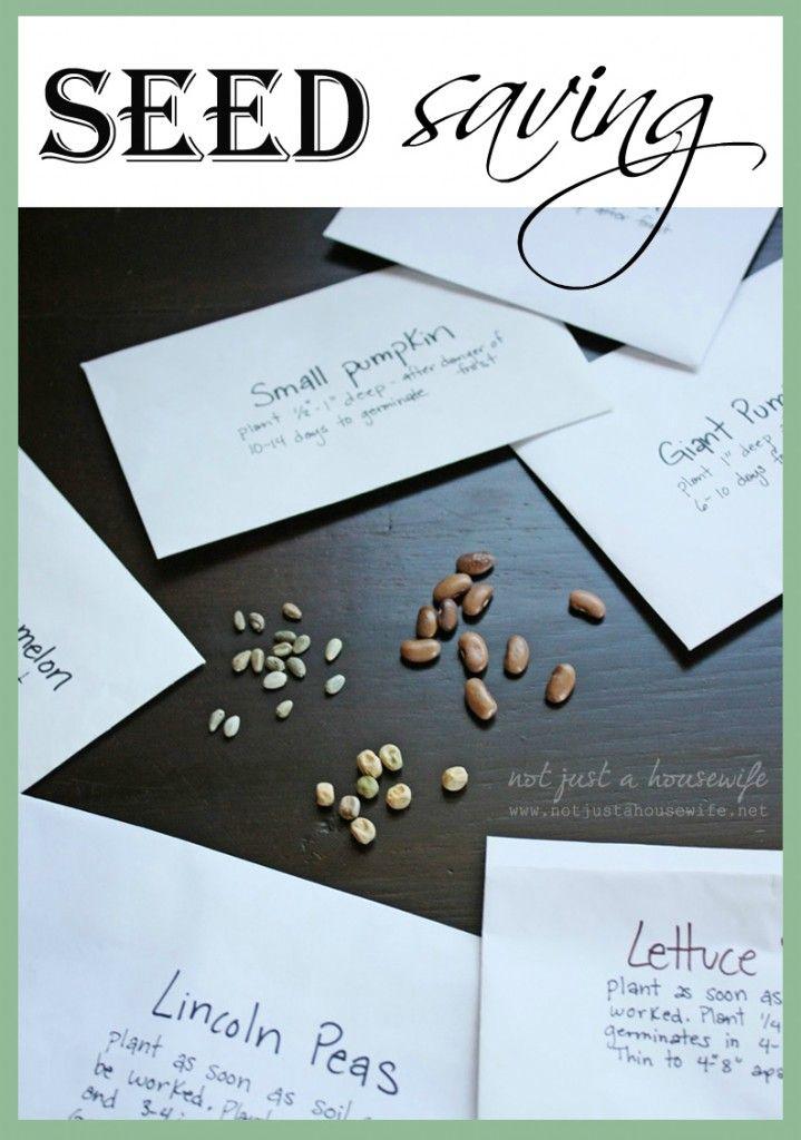 Harvest Time: Seed Saving | Sacred Garden | Garden