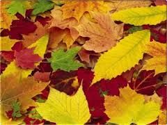 woodland leaves - Google Search