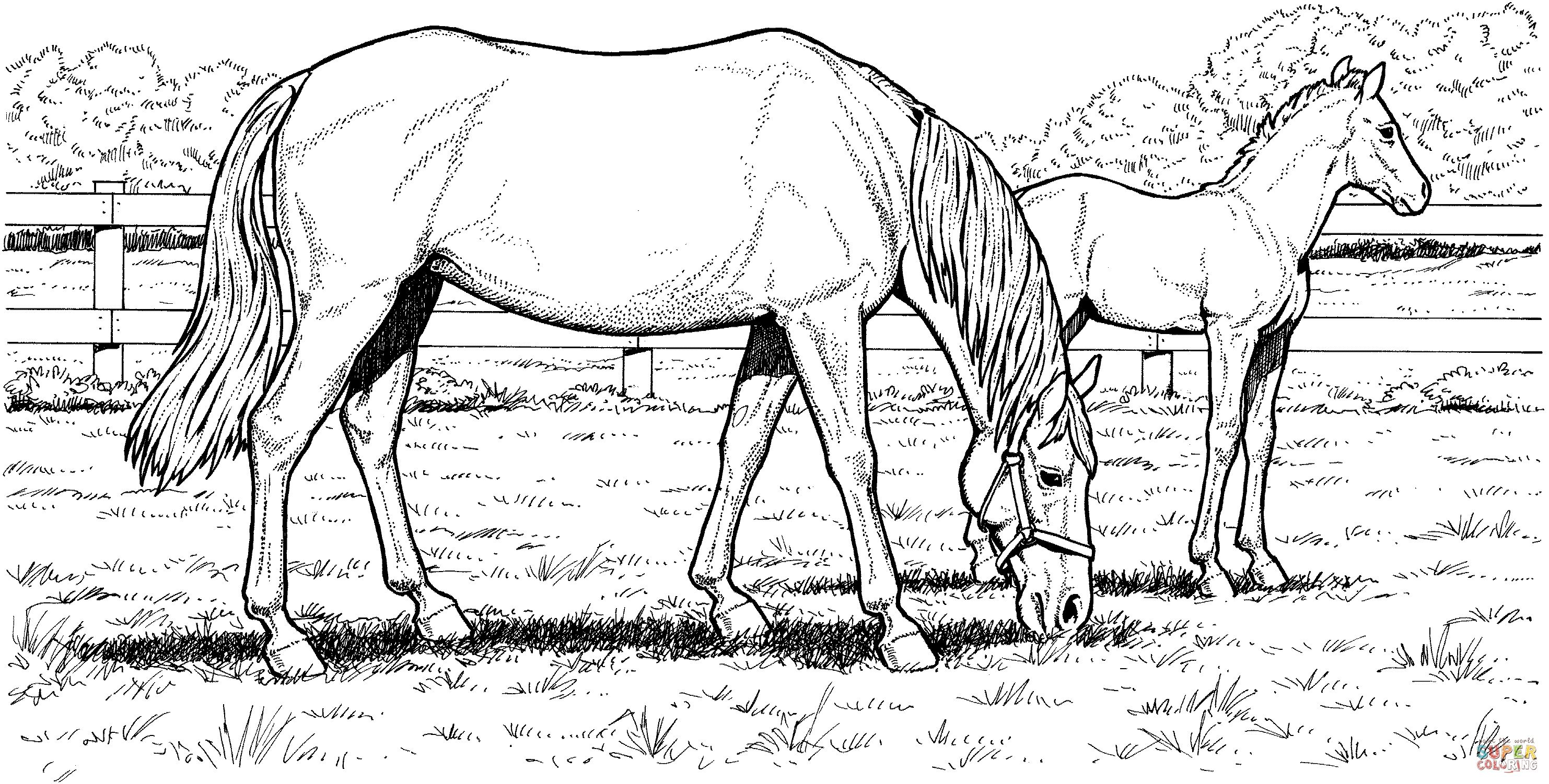 Horse Coloring Pages Grazzing Mare Horse And Filly