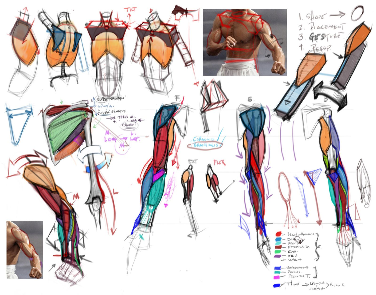 Character Design Lecture : Comparative lecture arms by mhampton michael hampton