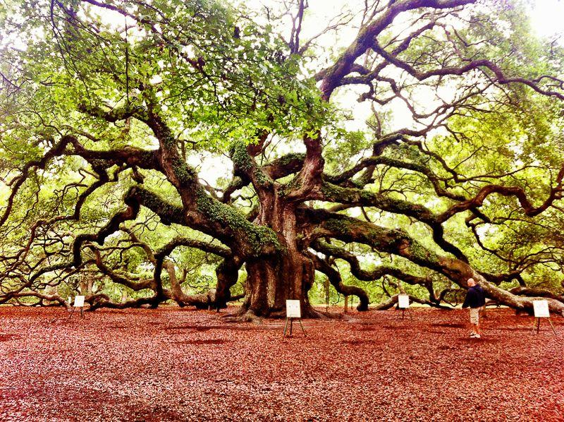 13 Fantastic Places In Charleston South Carolina