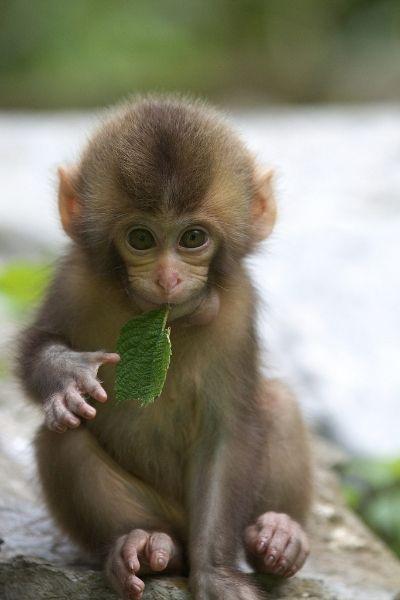 Cherjournaldesilmara Cute Baby Monkey Beautiful Creatures