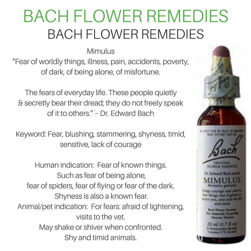 Pin By Tracy On Bach Remendies Bach Flower Remedies Flower