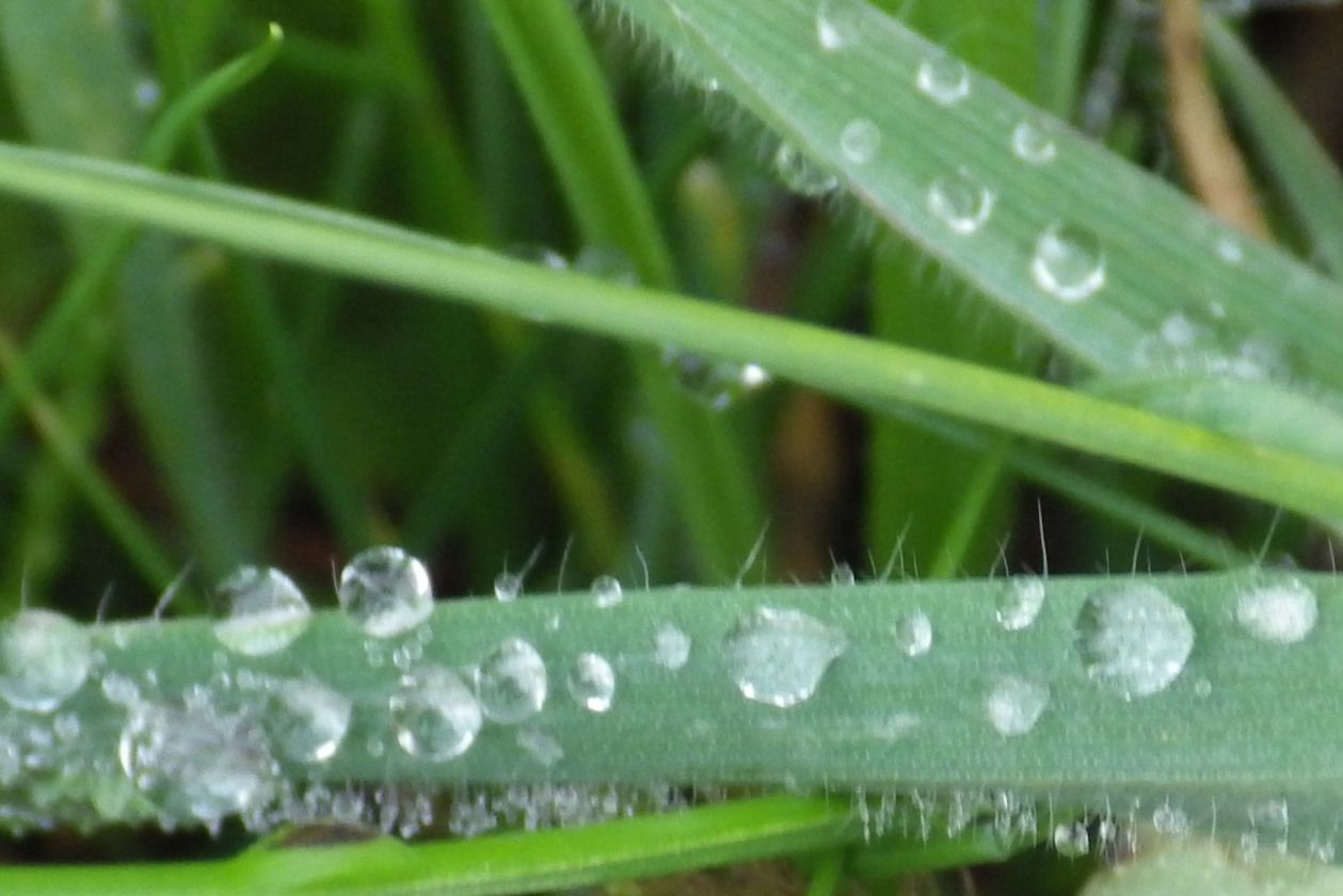rain drops on grass --  photo by Kathy King
