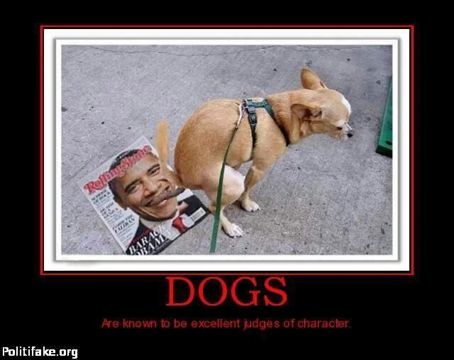 Dog Poops On Obamas Face Dogs Pooping Dogs Anti Obama