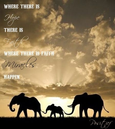 Elephant Quotes Amazing Hope Faith Miracles Elephants Quotes Sayings Follow