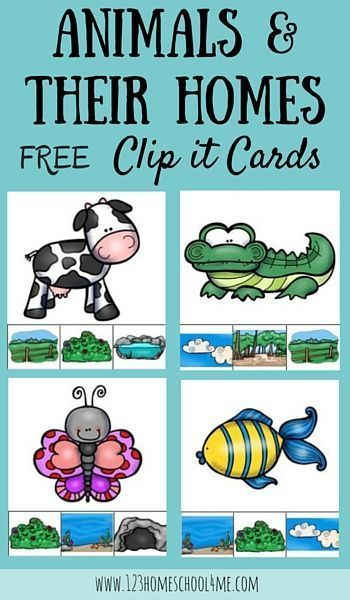 FREE Animal Homes Clip it Cards | Pinterest | Kindergarten age ...