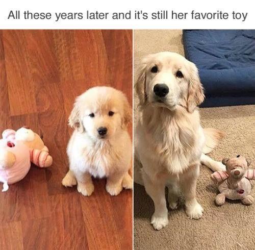 Pin De Jen Flores En Canine Craziness Perros Lindos Gatos Y Perros Lindos Animales Adorables