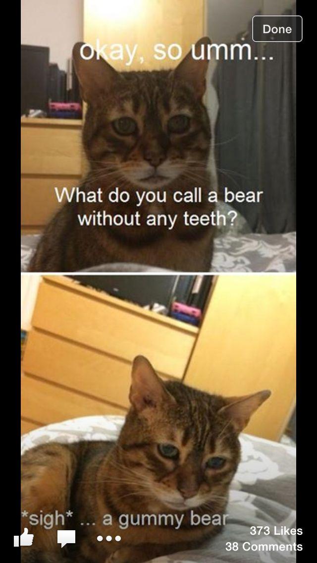 Part 1 Funny Cat Memes Cat Memes Cat And Dog Memes