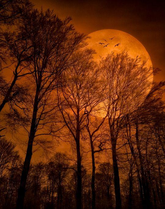 Pin by Sylvia Birgitta on beautiful things   Moon pictures, Beautiful moon,  Shoot the moon