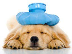 Pet Health Insurance Reviews Dog Has Diarrhea First Aid For Dogs Pet Health Insurance