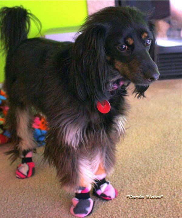 puppy booties