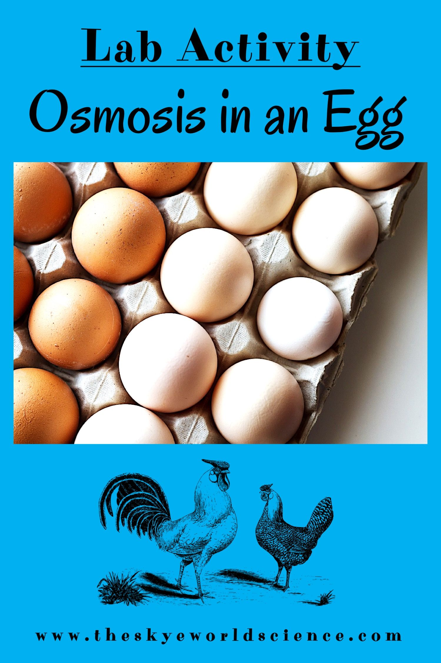 Lab Activity - Osmosis in an Egg   High school biology ...