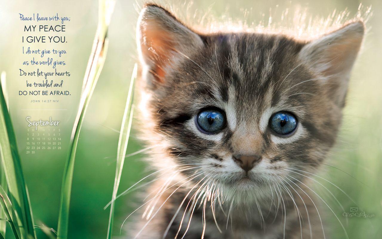 Sept 2013 John 1427 NIV Wallpaper this cat looks like