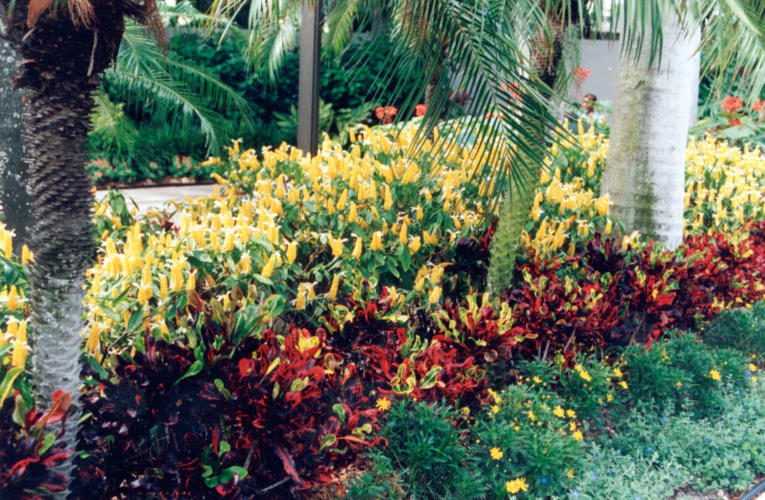 golden shrimp plants mixed