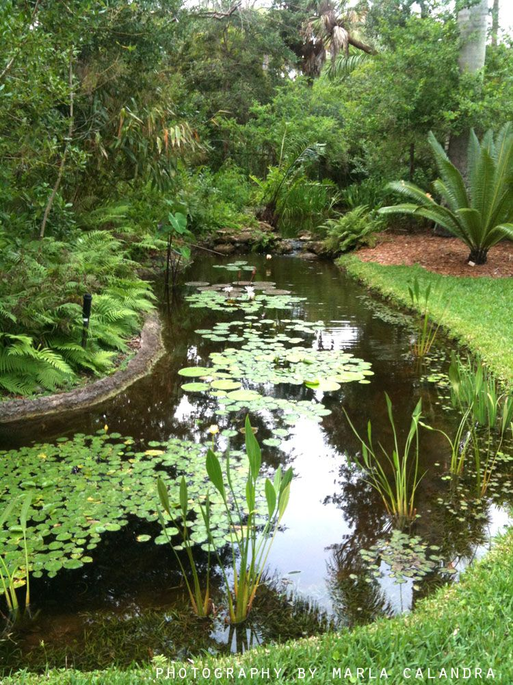mckee botanical gardens vero fl photography by marla calandra marla s photography