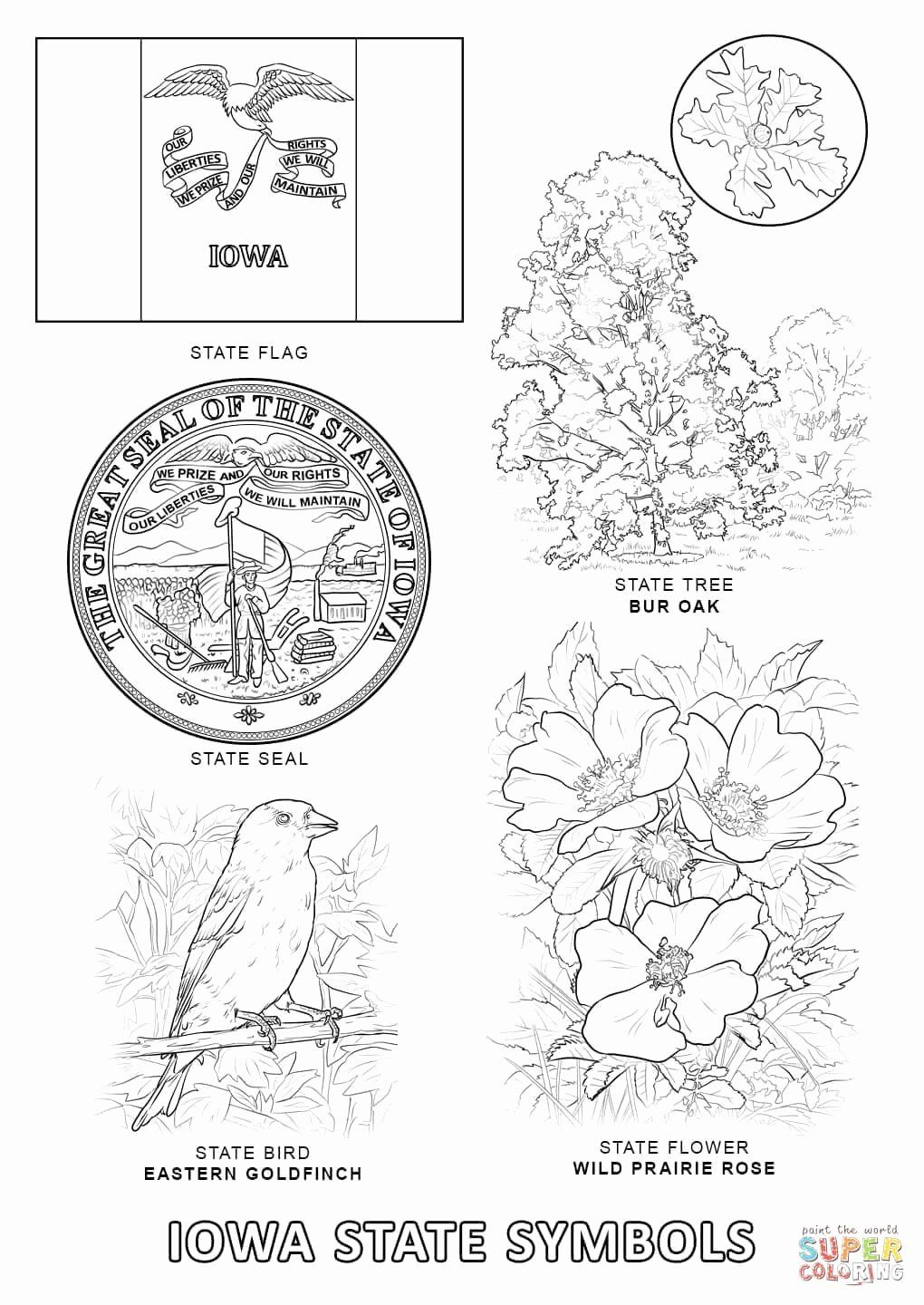 Minnesota State Flower Coloring Page Unique Iowa Flag Coloring